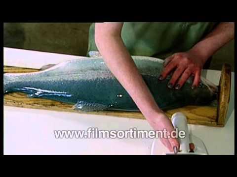 Gentechnik / Fischzucht / Ethik: MONSTERLACHSE (DVD / Vorschau)