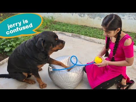 My dog is trying to help Anshu||funny dog videos.