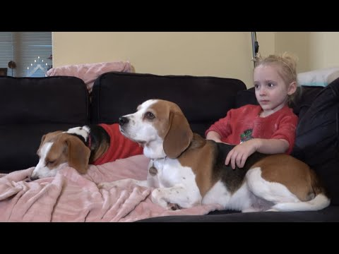 Little girl loves to watch movie with her family dogs | Charlie the dog, baby Laura and puppy Lilly