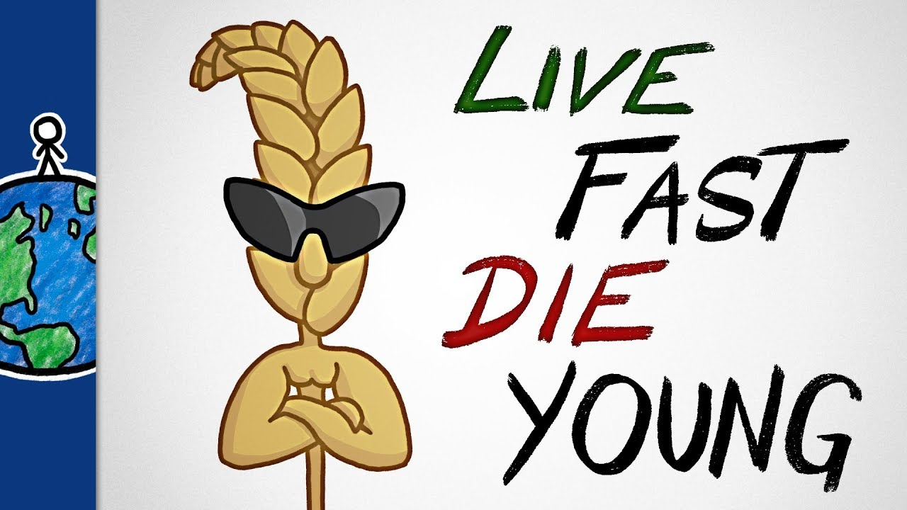 why-our-favorite-crops-live-fast-and-die-young