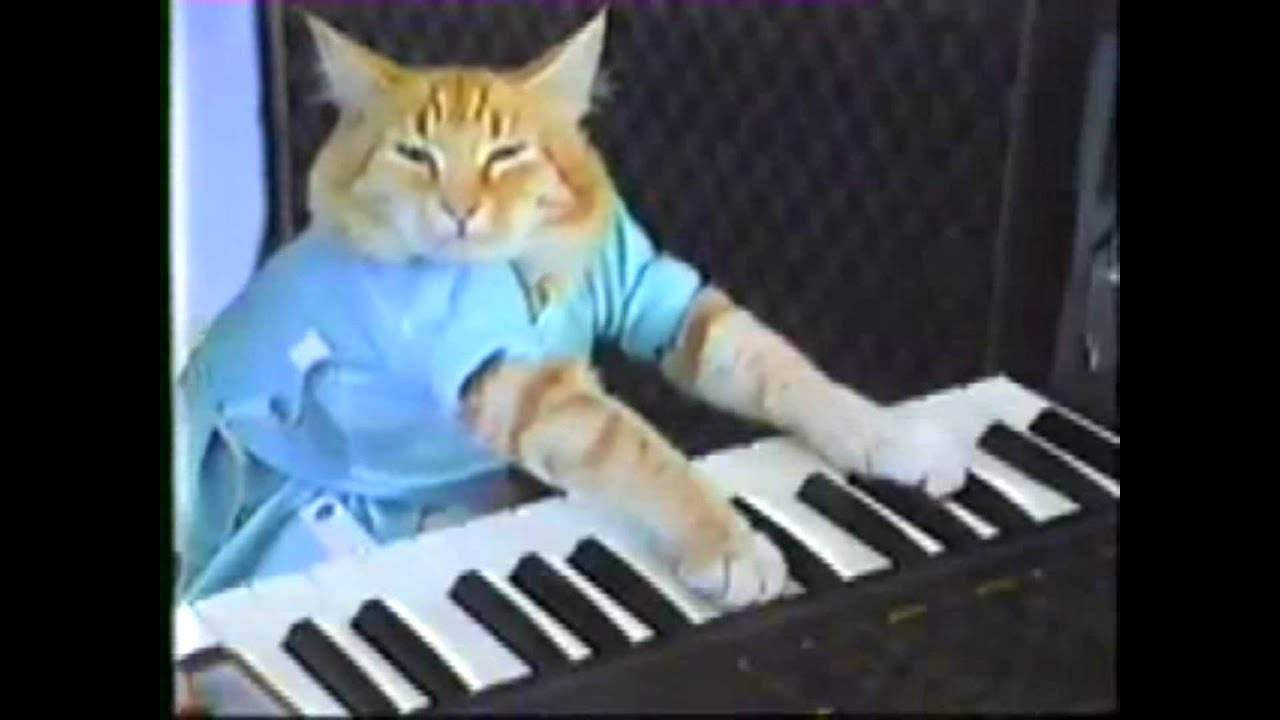 Keyboard cat minecraft skin : X real estate development xred query