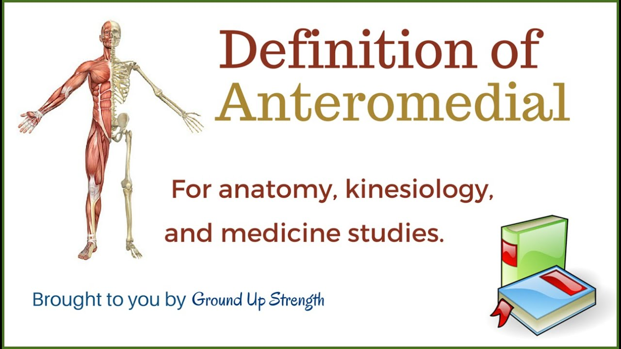 Anteromedial Definition (Anatomy, Kinesiology, Medicine) - YouTube