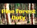 Pine forest Ooty   Shooting spot – Glimpse of Pine Forest   Ooty Tour