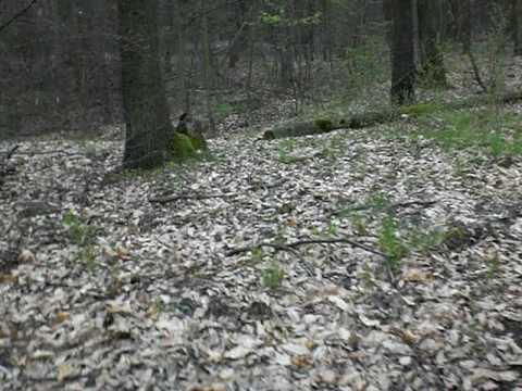Nález munice v Bořím lese