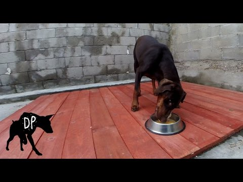 Feeding dogs raw meat!