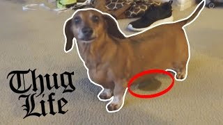 FUNNIEST DOG EVER!!