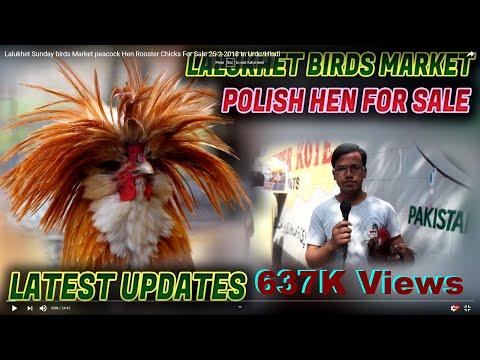 Lalukhet Sunday birds Market peacock Hen Rooster Chicks For Sale 25-2-2018 In Urdu/Hindi