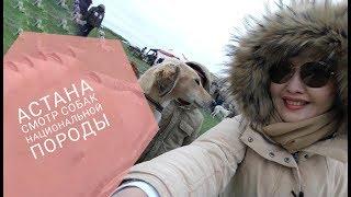 АСТАНА. Смотр собак национальной породы тазы