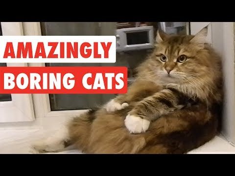 Amazingly Boring Cats | Funny Cat Video Compilation 2017