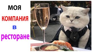 Короткие приколы и мемы с котами 17 Мая Смешные картинки с озвучкой #shorts