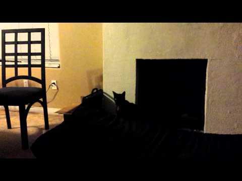 Black cat jumping like bunny
