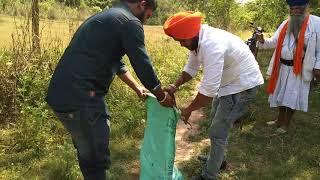 12फ़ीट 3इन्च लम्बा अजगर सांप,गांव वालो को मिली राहत,rescue big indian rock python,w no9814171064
