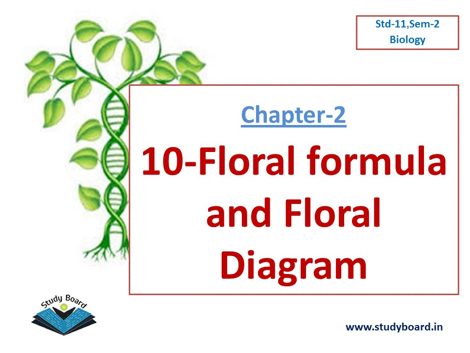 10 Floral formula and Floral Diagram  YouTube