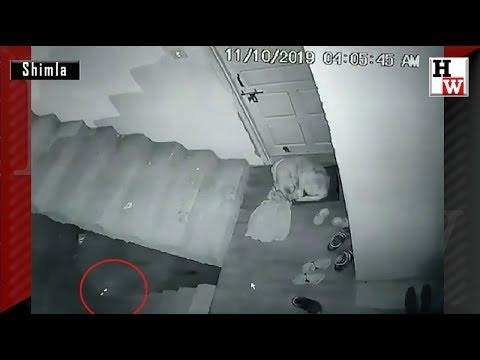 Leopard In Shimla City Hunts Pet Dog, Caught On CCTV