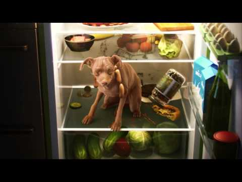 KOFOLA DOG- Fridge, full CGI, TV commercial.