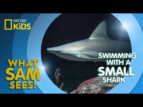 swimming-with-a-small-shark- -what-sam-sees