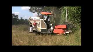 Cutting Rice with the Kubota DC 60 in Rural Thailand