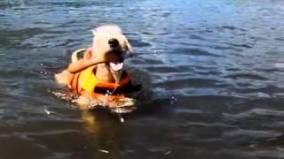お水に入るのが大好きになったみたいです.