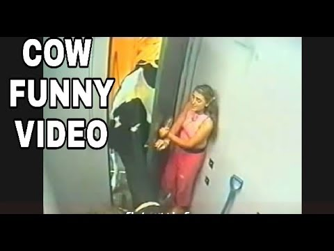 Download BEST COW ATTACK FUNNY VUDEO || COW FAIL COMPILATION 2017