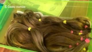 Akci Daruj vlasy Česko odstartovalo děčínské kadeřnictví