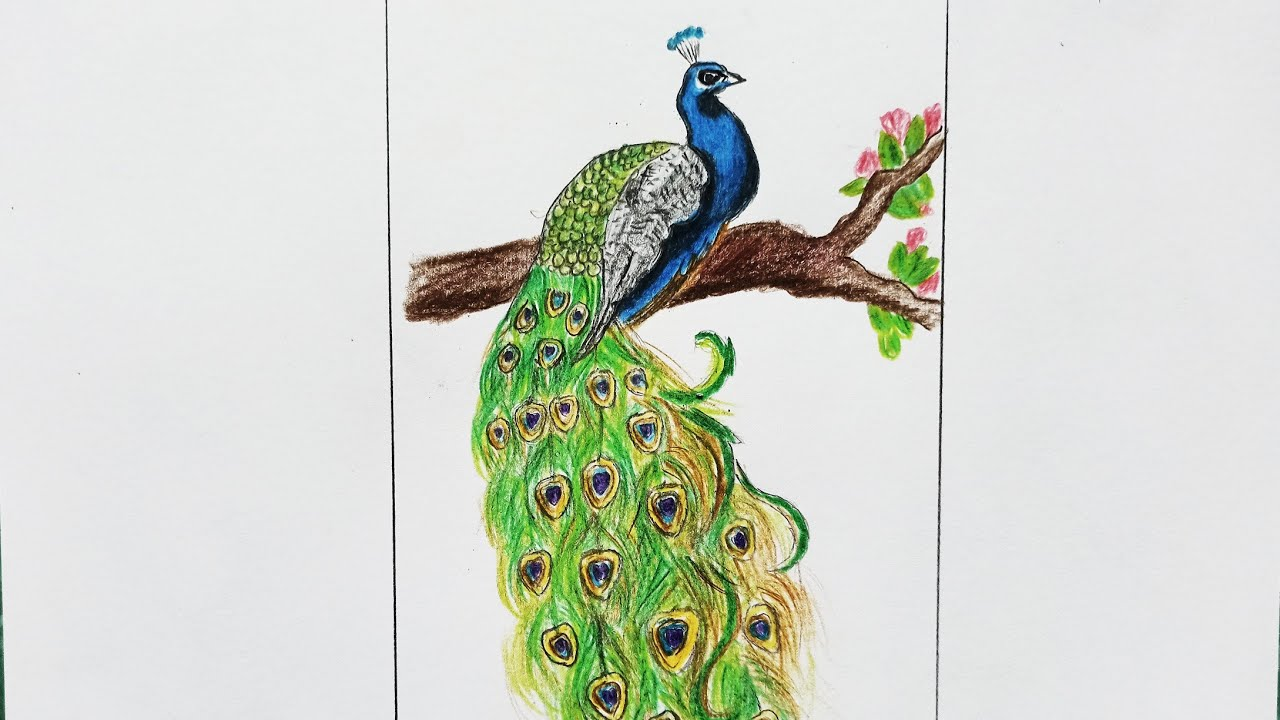 How to draw peafowl step by step