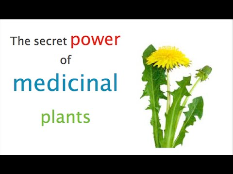 Herbs, Herbal Medicine with Natures Pharmacy