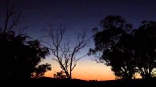 Laughing Kookaburras at Dawn