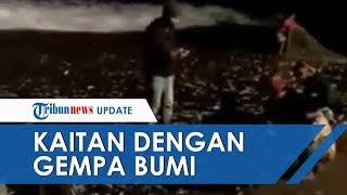 Download Video Viral Ikan ikan Terdampar di Pantai Canggu Bali, Dikabarkan Ada Kaitan dengan Gempa Bumi MP3 3GP MP4