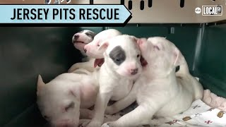 Animal Rescue Gives Dogs a Second Chance at Life | All Good