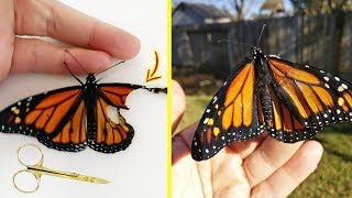 When She Found This Butterfly With A Broken Wing, A Woman Came Up With The Most Inspiring Solution thumbnail