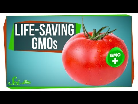 Spicy Tomatoes and 4 Other GMOs That Could Save Lives