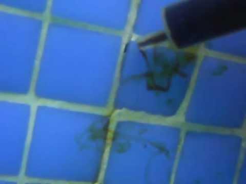 fuga de agua en piscina tlf