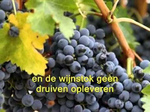 Al zou de vijgeboom niet uitbotten (www.zmozeksongsforgod.com) - NL