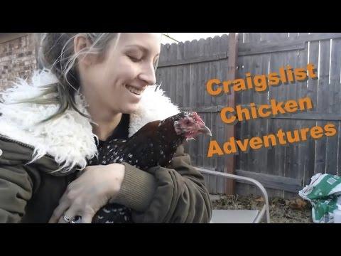 Craigslist Chicken Adventures