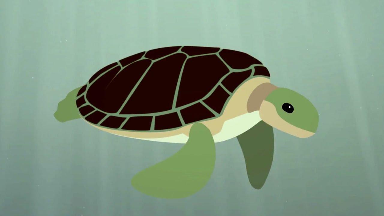La supervivencia de la tortuga marina - Scott Gass