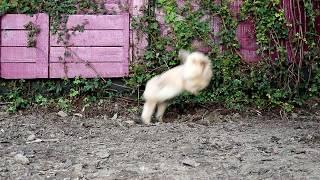 funny bunny binkies