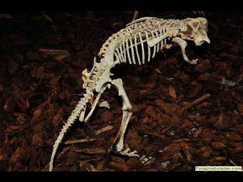 Underground Zootopia: Ancient fossils unlock mysteries dating back millions of years