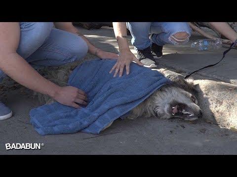 Quisimos cambiarle la vida a este perro, pero él cambió la nuestra