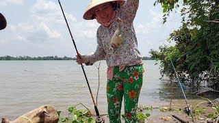 Chạy đua với con nước, cá lên liên tục. Hôm nay vợ xuất chiêu kéo cá | Săn bắt SÓC TRĂNG |