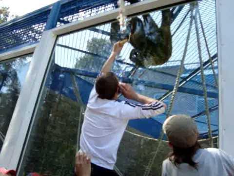 Картинки по запросу новосибирск зоопарк орангутанги