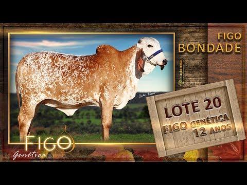 LOTE 20 - FIGO BONDADE - HCFG 1474