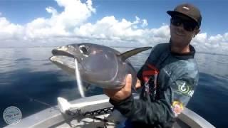 Moreton Bay Longtail Tuna Action - Fish Inc. Lures Flanker Sinking Stickbait