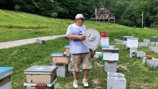 Beekeeping Saved My Life