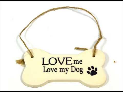 เพลงสากล Love me love my dog  Peter Shelley