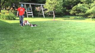 Meet Matt Hendricks | Follow The Leader Dog Training And Rehabilitation Llc