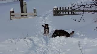 Собаки весны не ждут 2.