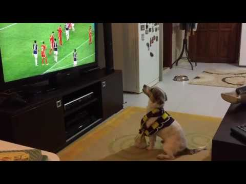 Dog watching football and shows amazing reaction