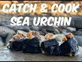 Catch and Cook | Sea Urchin | Sushi FAIL