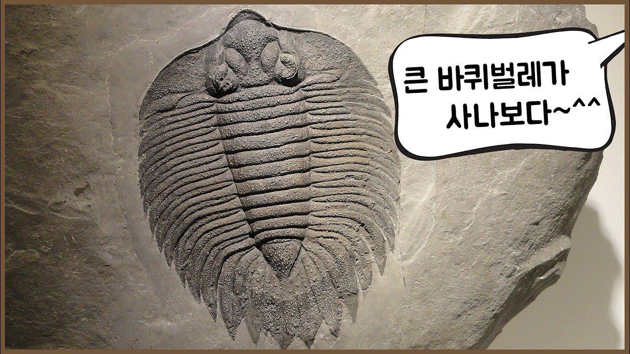 진화론이 나오기 전에는 화석을 어떻게 해석했을까? (feat. 라마르크)