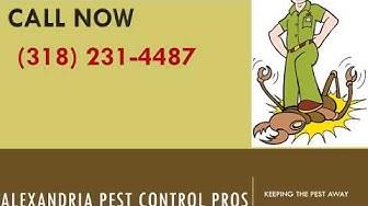 Alexandria bed bug exterminator service - Bed Bugs Control in Alexandria